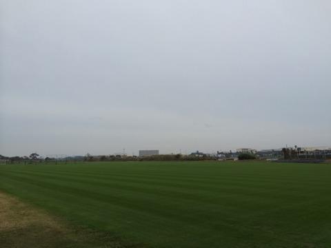 芝生.jpeg