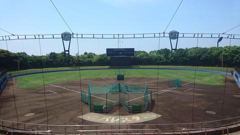 野球場 タテゼブ1.JPG