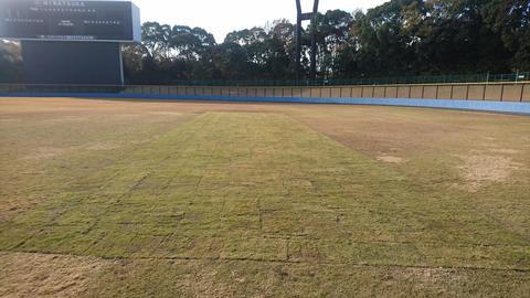 野球場12月補植3.JPG