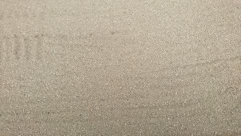 キヤノン砂2.JPG