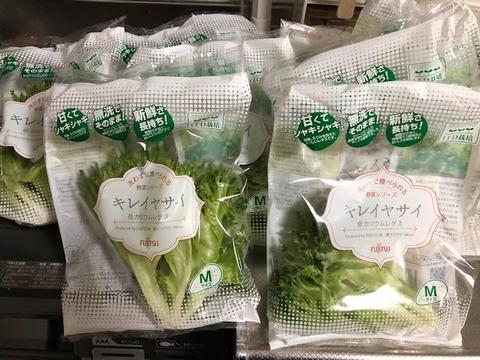 富士通レタス.jpg