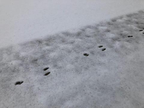 キヤノン雪4.jpg