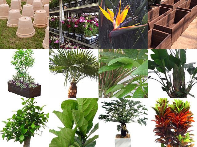 garden-info_news.jpg